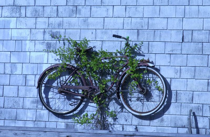 Bolinas Bicycle