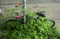One less bike on the road.  May, 2010.  Just down the block from the Strawberry workshop.