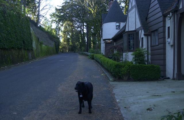 No. 6 My dog walking partner, Winnie, on S.W. Montgomery Dr.