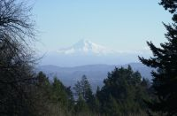 No. 19 Council Crest view of 11,600 ft. Mt. Hood off to the east.