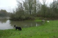 Thanksgiving weekend on the route to John Grochau's winery via the Wheatland Ferry.  Ferry was closed as the Willamette was higher than stage 16.  Winnie in the foreground and Alba grazing on delicious winter grass in the background.