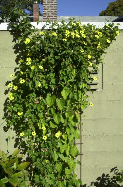 Kelley's urban garden, Autumn 2006.