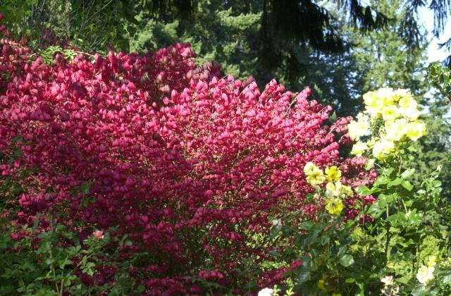 Washington Park Rose Garden, Autumn 2006.