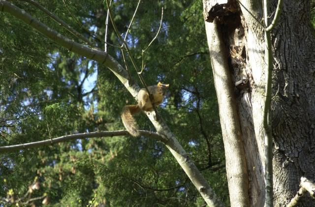 Winter Garden in Hoyt Arboretum 2005.  Plump juicy squirrels are Ollie's Nemesis.