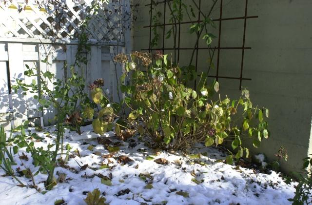 Kelley's garden in the December, 2008 snow.