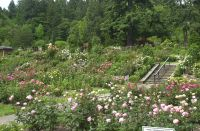 Washington Park Rose Garden, June, 2020