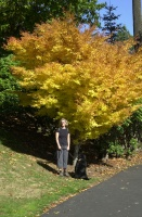 Pittock Mansion Walk, Autumn 2006.  Wife Kelley and Ollie on the Pittock Mansion grounds.