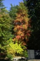 Washington Park, Autumn 2006.