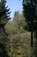 Winter Garden in Hoyt Arboretum 2005.
