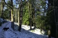 Washington Park MAC Trail, December, 2008.
